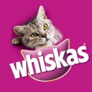 Maintain the best health for your feline friend - Whiskas