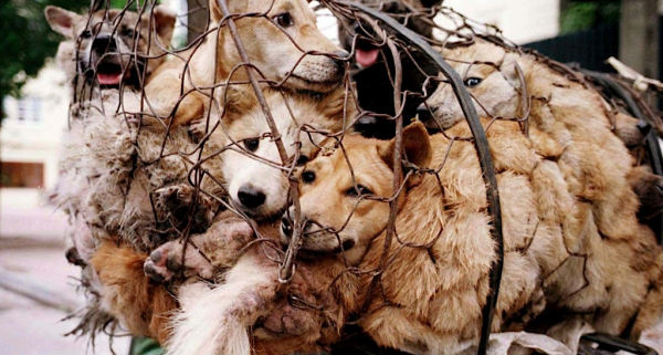 Victory For Activists As China Reclassifies Dogs As Pets In New Guidelines