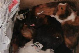 SPCA calls for information regarding abandoned animals
