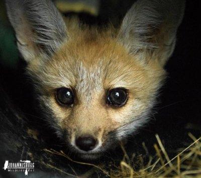 Joburg wild animals vet care free