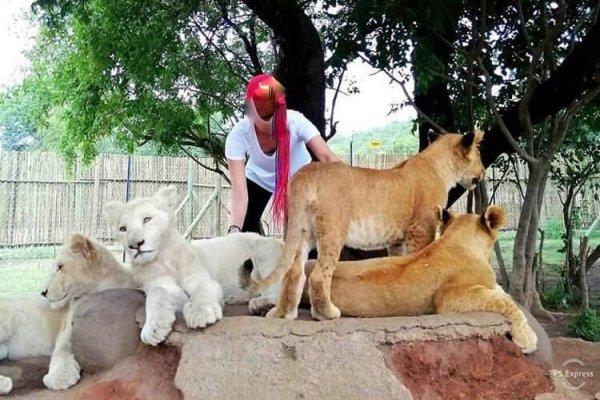 Lion park scam