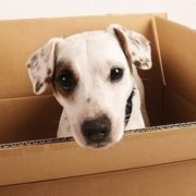 Pets on the Move: Alleviate the Stress of Moving Homes