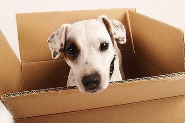 Pets move