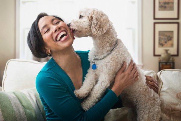 SA's pet care