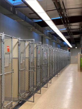 Hamilton animal shelter empty cages