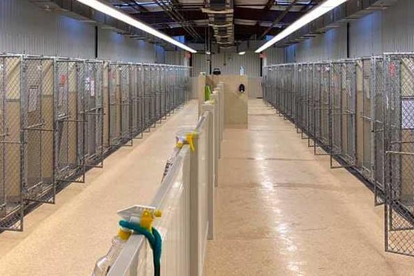 Hamilton animal shelter