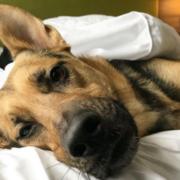 Hotel Foster Dog