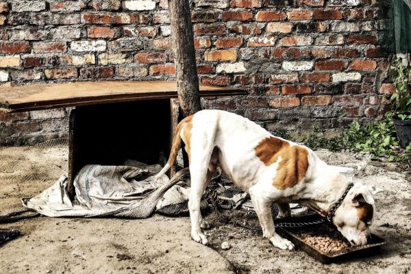 Tears Covid-19 Pet food appeal
