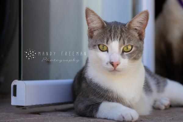rescue animals - Mr Grey