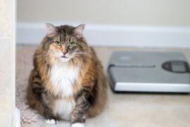 COVID-19 fuels pet obesity