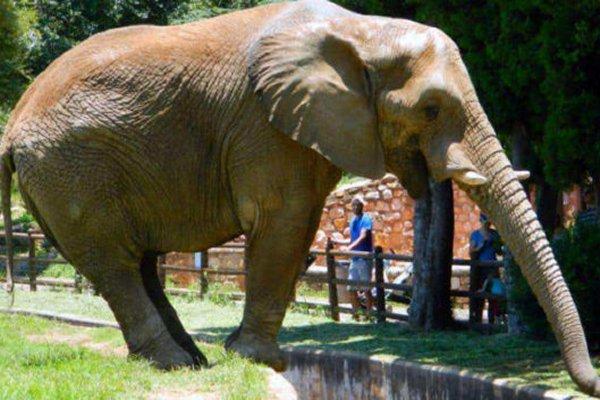 Joburg Zoo