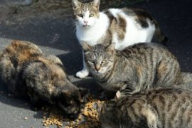 FeLV only affects cats and cannot be transmitted to people, dogs, or other animals. File picture: Shelley Kjonstad/African News Agency(ANA)