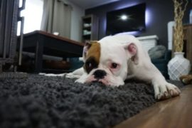Cape Town proposes new rule for pets – what you should know