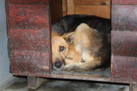 Emergency help needed for flooded Khayelitsha pet shelter