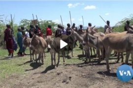Kenya Donkey Keepers Protect Animals from Slaughter for Medicine