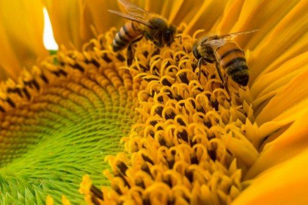 Planting a bee-friendly garden