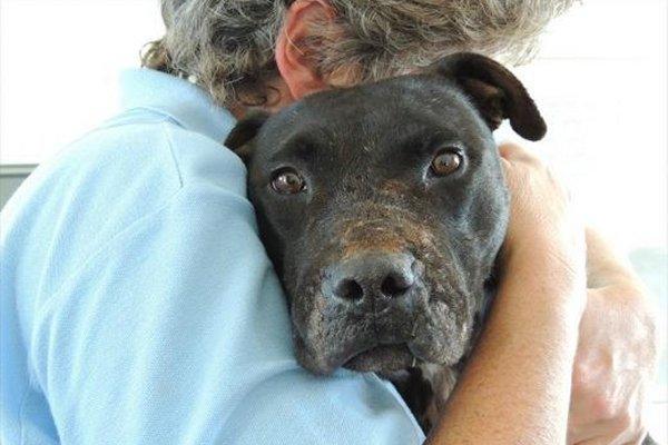 SPCA reunites dog