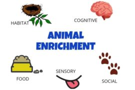 ANIMALS 101 – MEETING YOUR PET'S NEEDS.