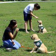 Dog Training tips - image