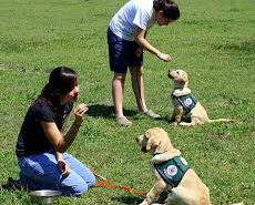 Dog Training tips - image