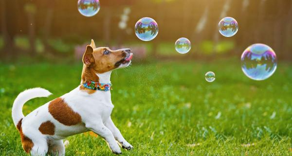 Pet Insurance Awareness Month