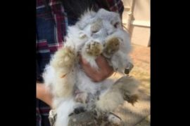 Residents urged not to dump bunnies