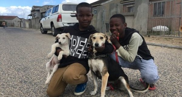 Vaccinating 1000 dogs for World Rabies Day after Khayelitsha rabies outbreak