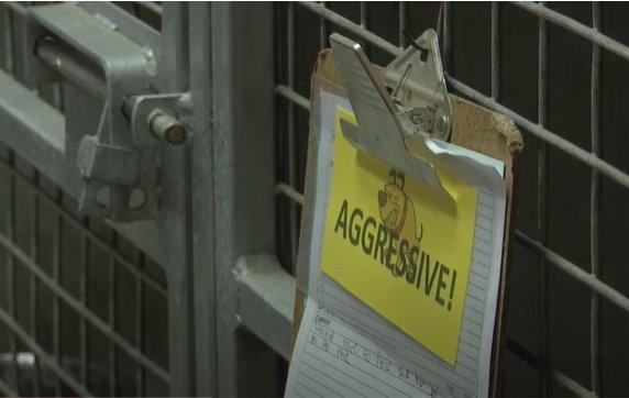 Khayelitsha veterinarians speak out about dangerous rabies cases