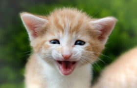 7-tips-for-introducing-a-new-kitten-to-kids