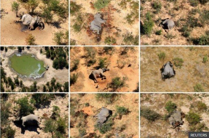 Botswana: Mystery elephant deaths